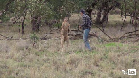カンガルー 犬 救出 イノシシ狩り オーストラリア ヘッドロック パンチ