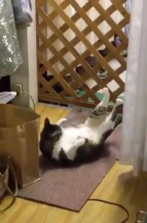 猫 毛繕い 腹筋 後ろ足 Twitter こけし