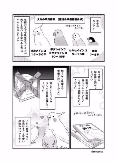 小鳥 飼う前 デメリット 漫画 モー助 インコ 文鳥