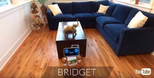 小型ロボットのBRIDGET