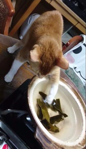 猫 だし 昆布 出汁 味見 鍋 かわいい Twitter