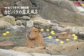 伊豆シャボテン動物公園・カピバラ