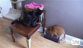 猫さま用「ご主人の膝枕クッション」や「いらいらタッパー」を作っちゃう