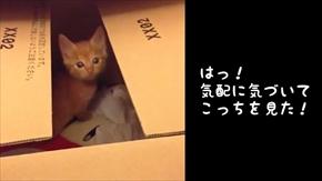 茶トラ子猫ひろし