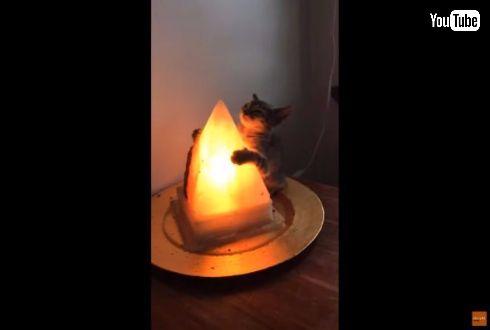 猫 子猫 ランプ 抱きつく 離れない ハグ 寒い