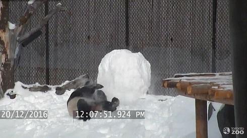 雪だるまとパンダ