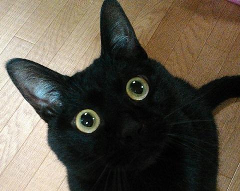まん丸お目めの猫