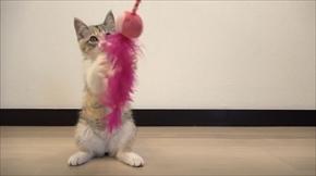 新入り猫モモ