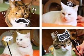 猫飯碗・猫水盃