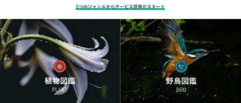 図鑑.jp 読み放題 生き物 山と溪谷社 野鳥 植物