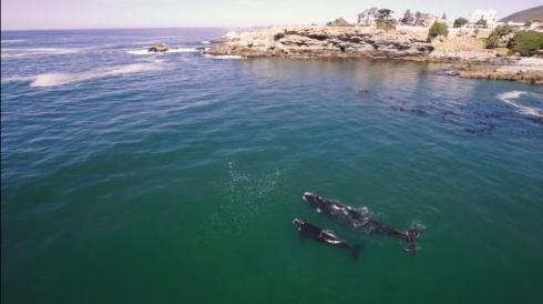 アフリカの海も絶景