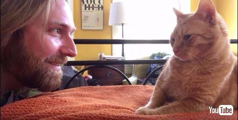 何が起こっているのかわからないネコ