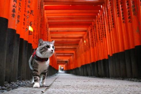 ニャン吉 写真集 旅 猫 笑う門には福来る