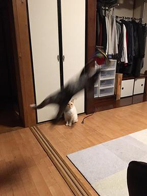 大はしゃぎ猫