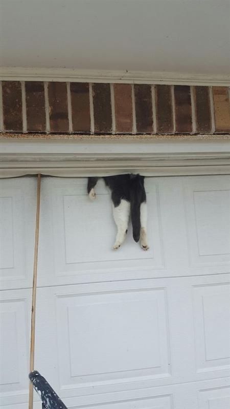 「ガレージのドアと壁の間に猫が挟まっている」通報を受けルイジアナで警官が猫を助ける