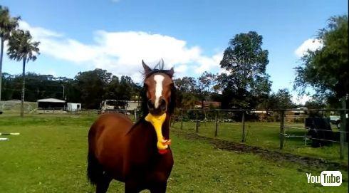 馬 おもちゃ 音 鶏 チキン YouTube