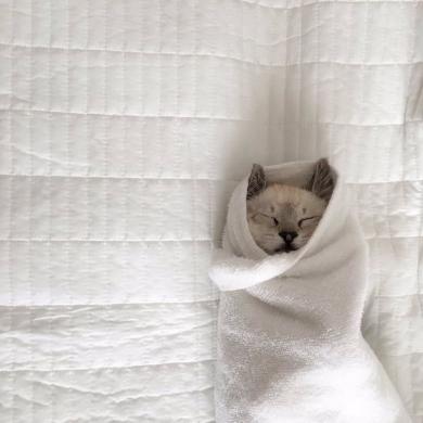猫 お包み 寝る Twitter