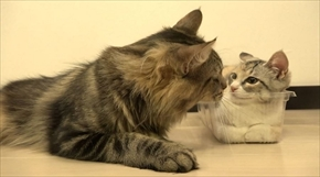 猫家族の変化