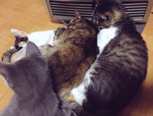 猫 暖房 威圧 集まる