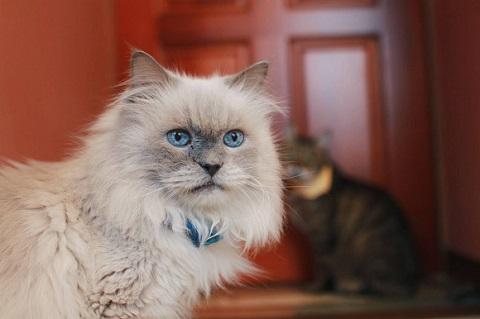 保護猫カフェ