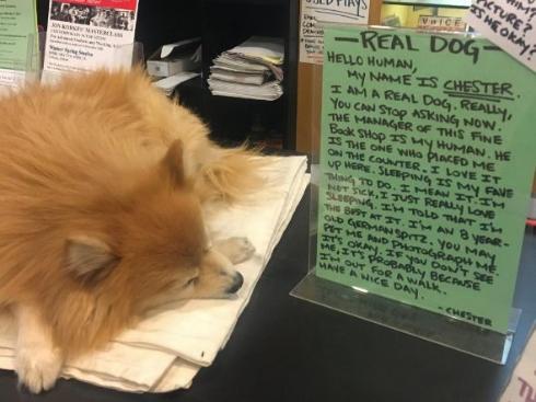 犬 寝る 本屋 本物 掲示