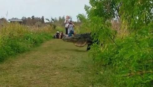 ワニ 大きい でかい フロリダ州 Humpback ザトウクジラ