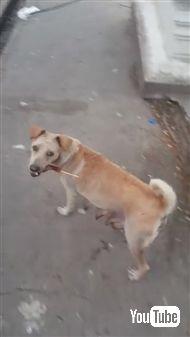 野良犬に餌をあげて後をつけてみると……子犬ちゃんたちにあげていた!