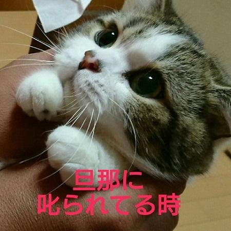 叱られたときの猫