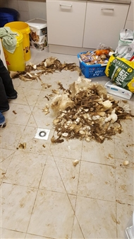 モサモサに虐待された犬など、50匹以上の動物がドイツで救出