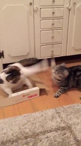 高速猫パンチ