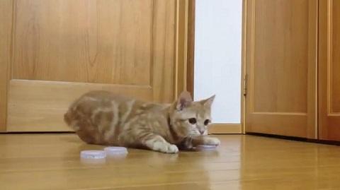 猫キーパー