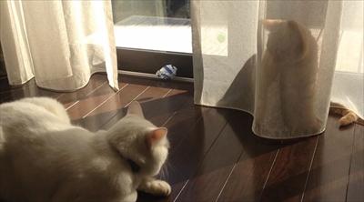 茶トラ猫ひろしのお庭デビュー