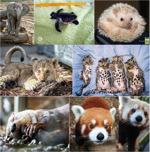 かわいい動物のハッシュタグ
