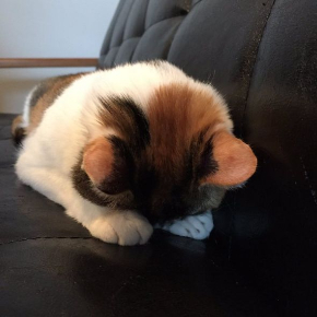 猫 ごめん寝