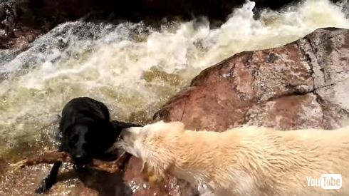 犬 救助 川 棒 溺れる 助ける