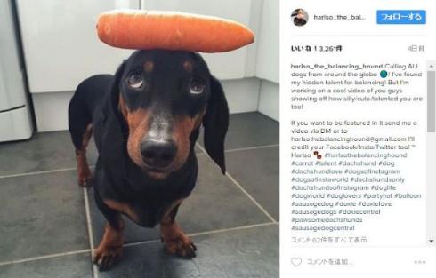 犬 頭 乗っける バランス にんじん あひる Instagram