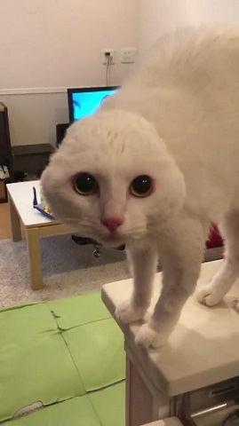 耳が見えなくなった猫ちゃん