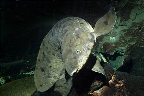 世界最高齢の魚