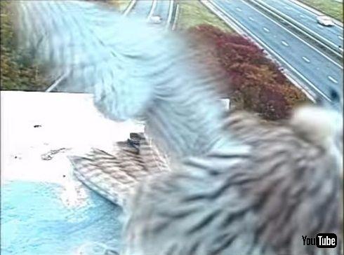 監視カメラに写った3羽