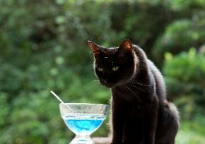 ねこあつめ 実写 映画 猫 ちゃはちさん