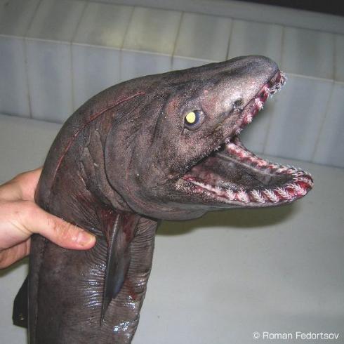 ロシア 奇妙 深海生物 バレンタインデー ニコニコ生放送
