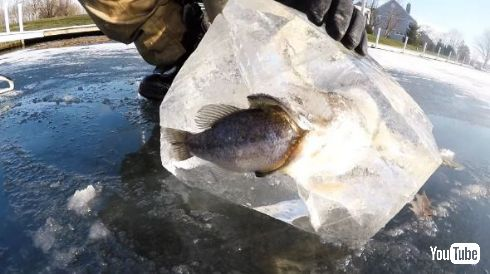 魚 丸呑み 氷漬け