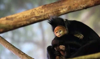 フランソワルトンの赤ちゃん