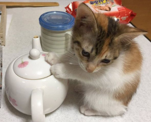 猫 急須 ヒーター 移動