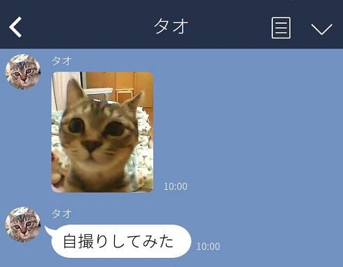 愛猫からLINE