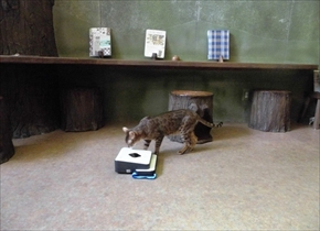 猫カフェてまりのおうち
