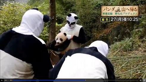 NHKパンダ