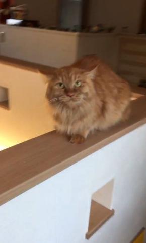 猫 猫カフェ 浮気 匂い ブチギレ