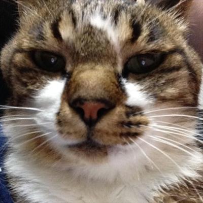 楽天トラベル看板猫ランキング