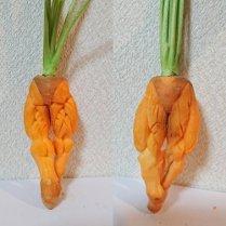 野菜 果物 カービング デザインカット アート